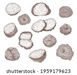 truffle mushroom hand drawn... | Shutterstock .eps vector #1959179623