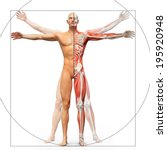 human anatomy displayed as the... | Shutterstock . vector #195920948