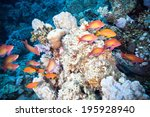 underwater world in egypt.  | Shutterstock . vector #195928940