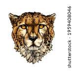 cheetah head portrait from a... | Shutterstock .eps vector #1959408046