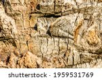 Texture Of Palm Tree Trunk For...