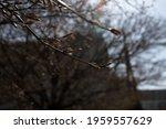 A Closeup Shot Of Bare Tree...