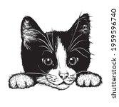 little black and white kitten... | Shutterstock .eps vector #1959596740