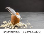 Bird Feather On Eggshell. Copy...