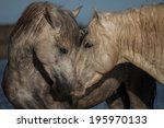 nuzzling stallions in the... | Shutterstock . vector #195970133