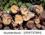 Stacked Firewood Logs For The...