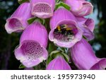 Bumble Bee Turns Inside...