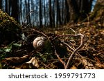 White Snail In The Forest Under ...