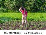 A Girl Treats Vegetable Beds...