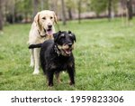 Two Dogs Spending Time In The...