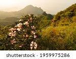 Panoramic View Of Jiufen ...