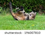 Stock photo funny cat playing game in the garden 196007810