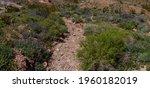 Rocky Streambed Runs Dry In The ...