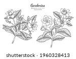 gardenias flower and leaf hand... | Shutterstock .eps vector #1960328413