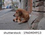 Stray Feral Dog On A Street.
