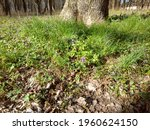 green spring grass with tree   Shutterstock . vector #1960624150
