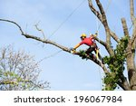 An Arborist Cutting A Tree Wit...