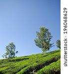 tea plantation  | Shutterstock . vector #196068629