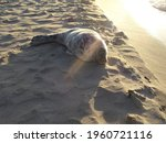 Beautiful cute sea lion seal. Natural wildlife shot. Seals resting on sand with ocean sea background. Wild animal in nature. High quality photo