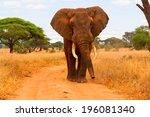 elephant walking | Shutterstock . vector #196081340