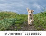 Shot Of Cute Puppy Running In...