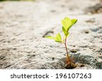 Green Sprout On Stone