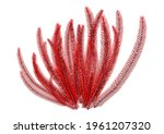 3d Rendering Of A Coral  A...
