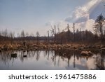 A Swamp In Early Spring With...