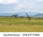 Serengeti National Park ...