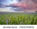 A Large Field Of Wildflowers...