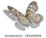Butterfly  Idea Leuconoe  Paper ...