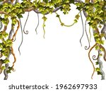 ivy frame. liana branches and...   Shutterstock .eps vector #1962697933