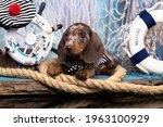 Dachshund Puppy Sailor And Sea...