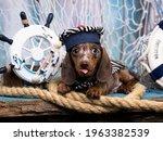Dachshund Puppy Sailor In Hat ...