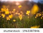 flowers at sunset. soft focus. | Shutterstock . vector #1963387846