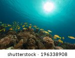 bluelined snappers in the red... | Shutterstock . vector #196338908