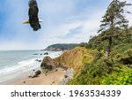 An Eagle Flies Over The...