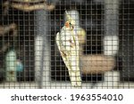 Exotic bird posing against the chicken wire of the cage in bright sunlight