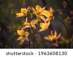 beautiful flowers close up on... | Shutterstock . vector #1963608130