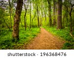 Trail Through The Forest At...