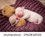 A Tiny Puppy Sleeping On A...