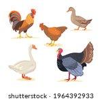 Set Of Cartoon Farm  Poultry...