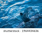 Waterfowl Stands On A Stone And ...