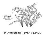 bluebell flower and leaf hand... | Shutterstock .eps vector #1964713420