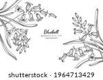 bluebell flower and leaf hand... | Shutterstock .eps vector #1964713429