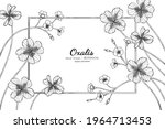 oxalis flower and leaf hand... | Shutterstock .eps vector #1964713453