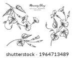 morning glory flower and leaf... | Shutterstock .eps vector #1964713489