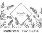 lavender flower and leaf hand... | Shutterstock .eps vector #1964713516