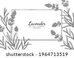 lavender flower and leaf hand... | Shutterstock .eps vector #1964713519
