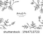 butterfly peas flower and leaf... | Shutterstock .eps vector #1964713723